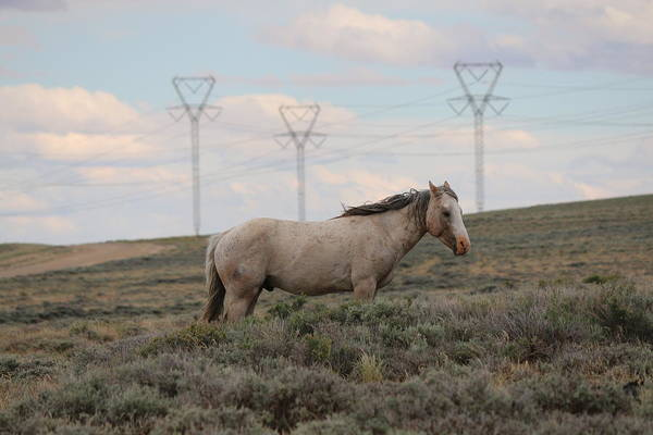 Photograph - Wild Horse 4 by Christy Pooschke