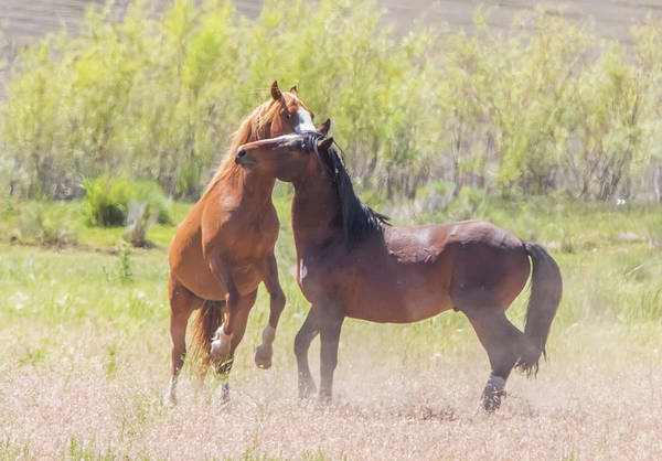 Photograph - Wild Horse Action by Marc Crumpler