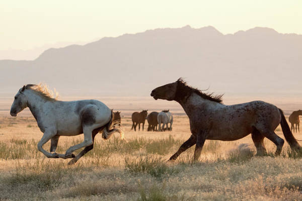 Photograph - Wild Horse Chase by Wesley Aston
