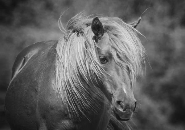 Crazy Horse Photograph - Wild Horse Of Assateague by Stephanie McDowell