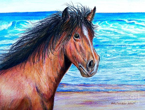 South Beach Drawing - Wild Horse On The Beach by Patricia L Davidson