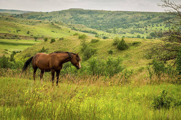 Wall Art - Photograph - Wild Horse by Paul Freidlund