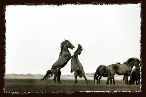 Photograph - Wild Horse Series - The Fight by Dan Friend