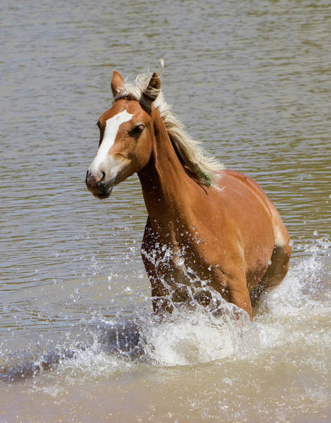 Photograph - Wild Horse Splashing At The Water Hole by Mark Miller