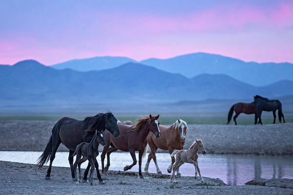 Photograph - Wild Horse Sunrise by Wesley Aston