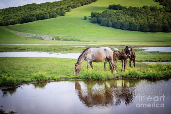 Photograph - Wild Horses 2 by Arnaldo Tarsetti