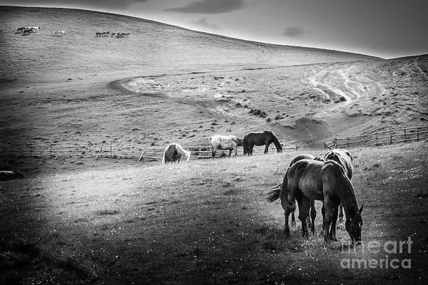 Photograph - Wild Horses 3 by Arnaldo Tarsetti