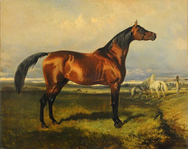 Wall Art - Painting - Wild Horses by Alfred de Dreux