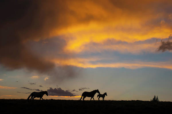 Photograph - Big Skies And Wild Horses by Mark Miller