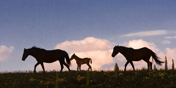 Wild Horses And Clouds Art Print