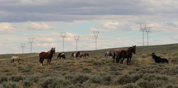 Photograph - Wild Horses  by Christy Pooschke