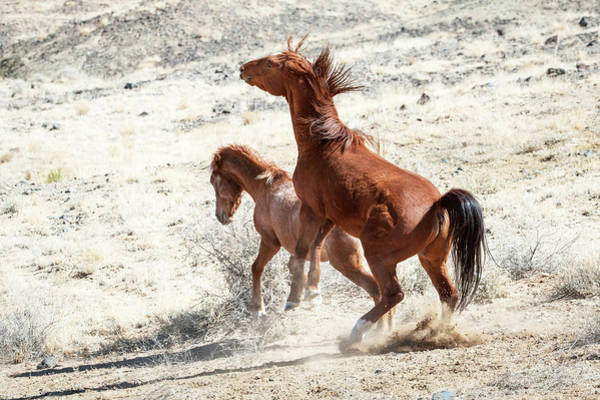 Wall Art - Photograph - Wild Horses Couple #2 by Catherine Lau