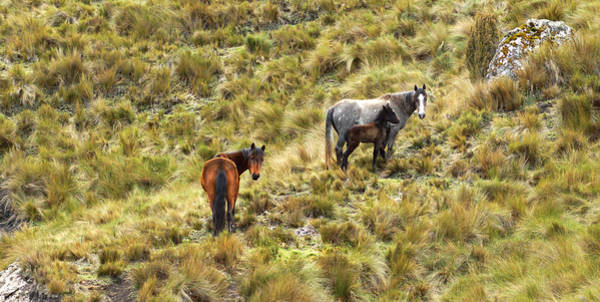 Photograph - Wild Horses I by Cameron Wood