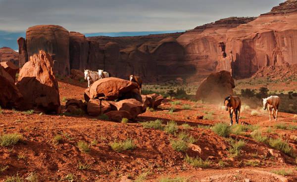 Photograph - Wild Horses by Jonas Wingfield