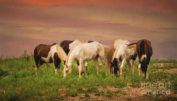 Wall Art - Photograph - Wild Horses by Lena Auxier