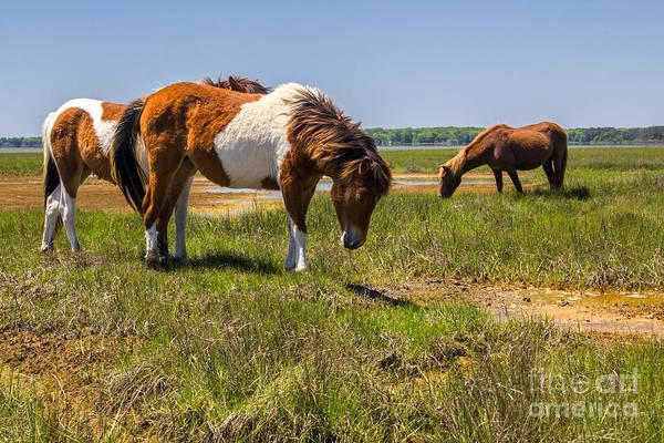 Photograph - Wild Horses Of Assateague by Rod Best