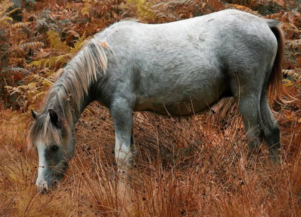 Church Stretton Photograph - Wild Horses Of The Long Mynd by Simon Hark