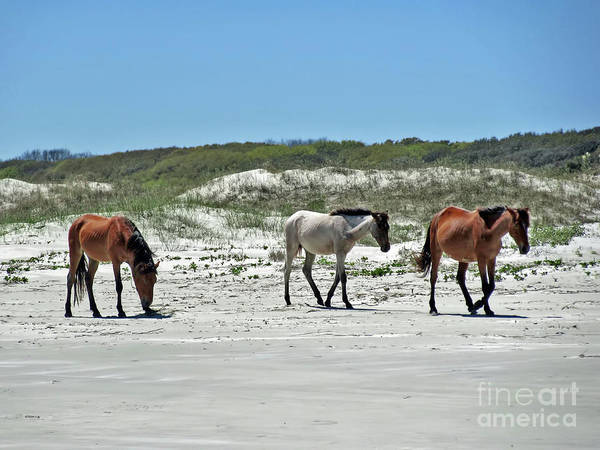 Wild Horses On The Beach Art Print