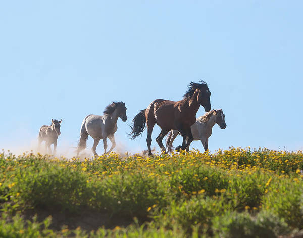 Photograph - Wild Horses Running by Mark Miller