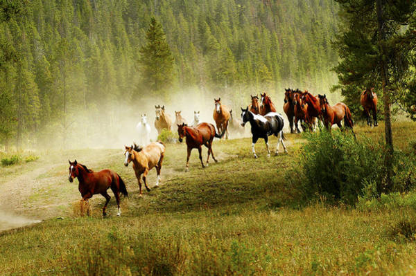 Photograph - Wild Horses by Scott Read