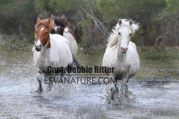 Photograph - Wild Horses Water 2029 by Captain Debbie Ritter