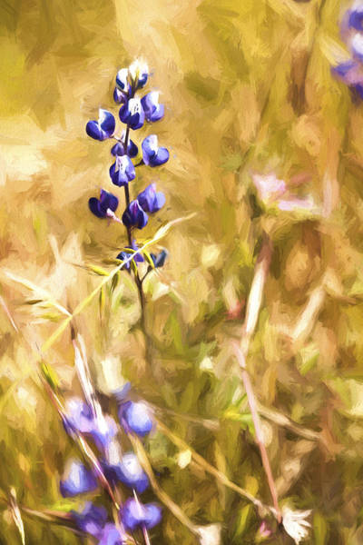 Digital Art - Wild In The Fieldiii by Jon Glaser