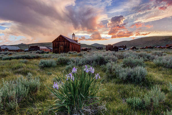 Wall Art - Photograph - Wild Iris In Bodie by Jeff Sullivan