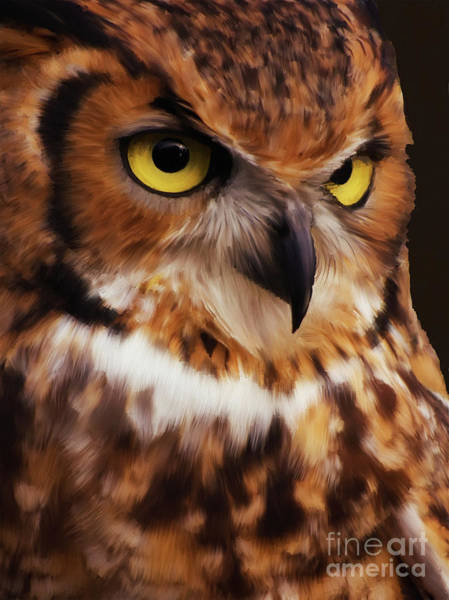 Wall Art - Painting - Wild Life Owls by Gull G
