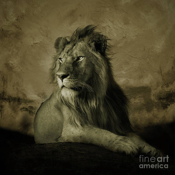 Wall Art - Painting - Wild Lion King  by Gull G