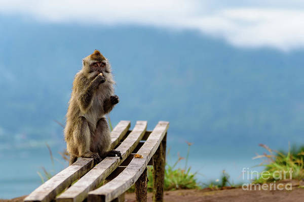 Photograph - Wild Monkey Eats His Breakfast With A View Of Lake Batur From The Top Of Mount Batur Volcano In Bali by Global Light Photography - Nicole Leffer
