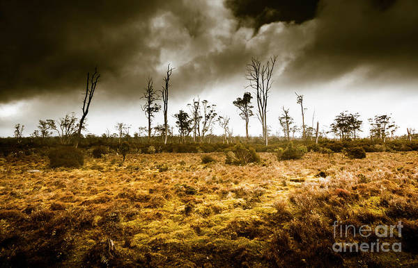 Gloomy Wall Art - Photograph - Wild Moors  by Jorgo Photography - Wall Art Gallery