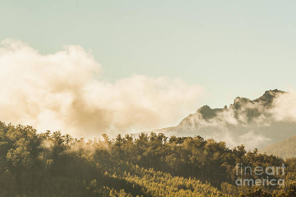 Forestry Photograph - Wild Morning Peak by Jorgo Photography - Wall Art Gallery