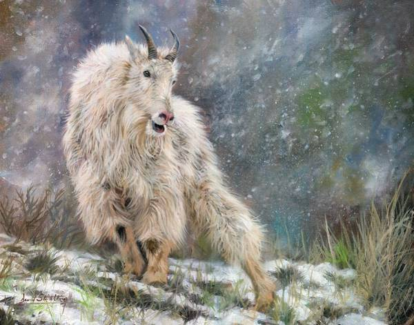Mountain Goat Wall Art - Painting - Wild Mountain Goat by David Stribbling