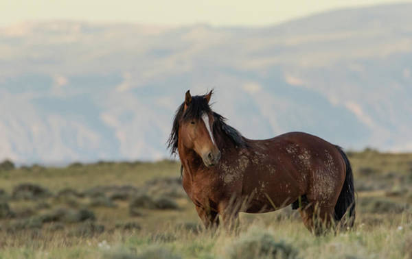 Photograph - Wild Mustang by Ronnie and Frances Howard
