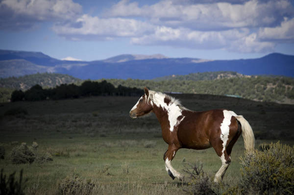 Photograph - Wild Mustangs Of New Mexico 45 by Catherine Sobredo