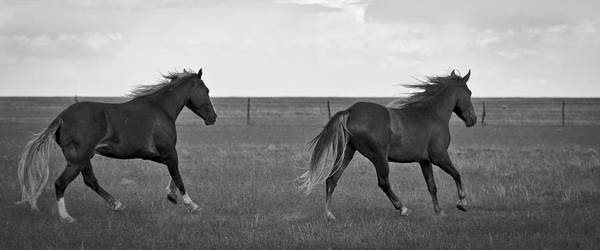 Photograph - Wild Mustangs Of New Mexico 46 by Catherine Sobredo