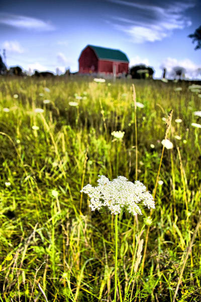Queen Anne Style Photograph - ...wild 'n'lacy by Russell Styles
