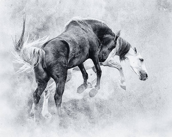 Wall Art - Photograph - Wild Ones by Ron  McGinnis