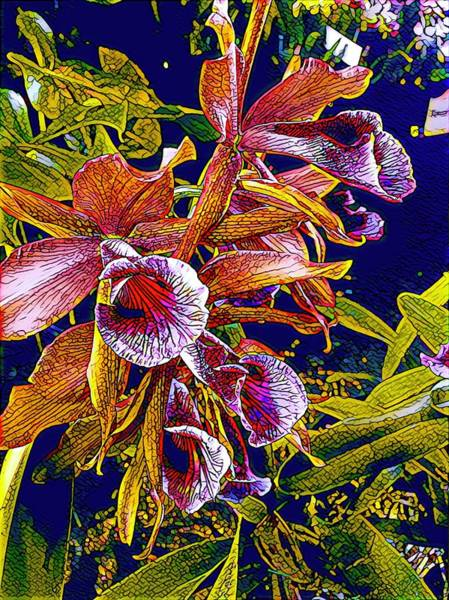 Photograph - Wild Orchid Aloha In Mosaic by Joalene Young