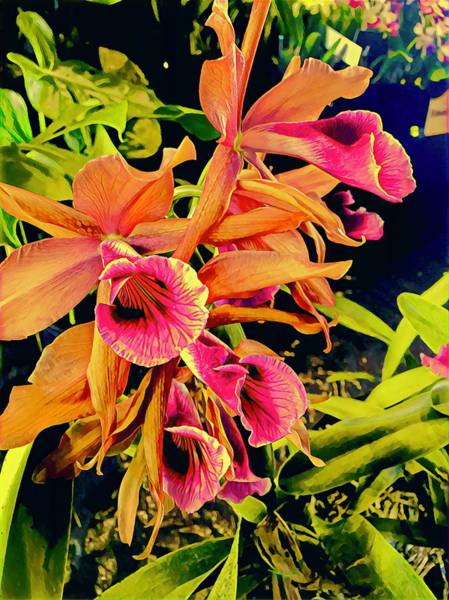 Photograph - Wild Orchid Aloha by Joalene Young