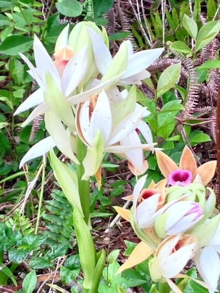 Wild Orchids In Pastel 2 Art Print