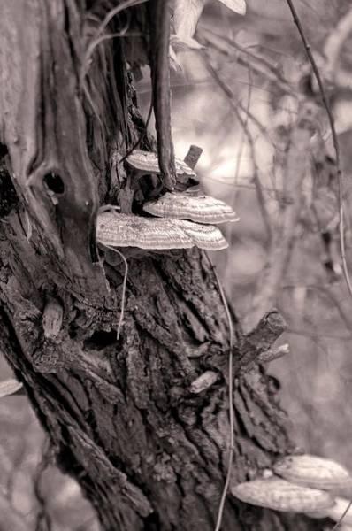 Photograph - Wild Pennsylvania Mushrooms - Monochrome by Susan Maxwell Schmidt