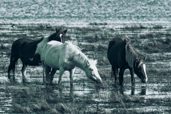 Photograph - Wild Ponies by Pete Federico