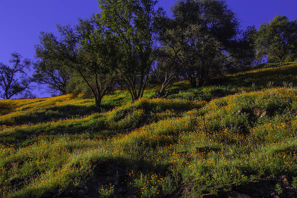 Wall Art - Photograph - Wild Poppies by Garry Gay