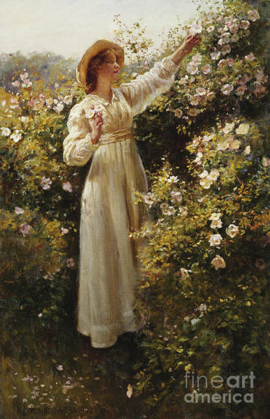 Pickers Wall Art - Painting - Wild Rose 1908 by Robert Payton Reid