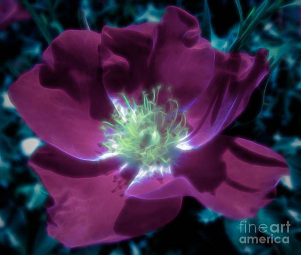 Photograph - Wild Rose Blue Dipinto Effect by Rose Santuci-Sofranko
