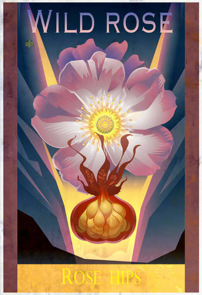 Native Garden Wall Art - Painting - Wild Rose Floral Poster by Garth Glazier