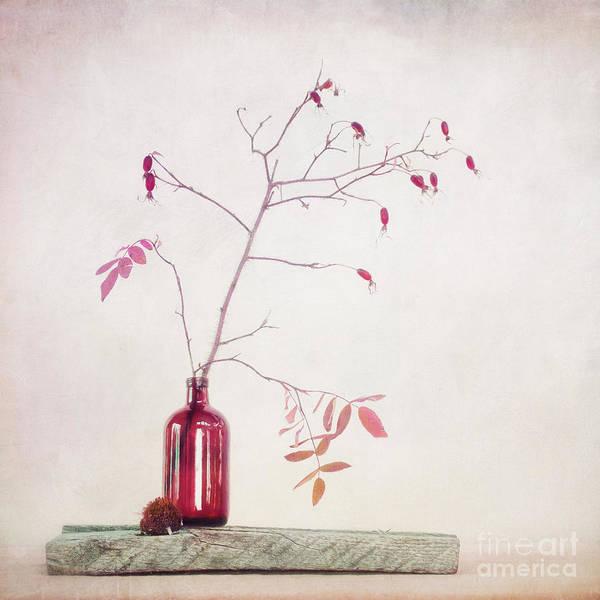 Wall Art - Photograph - Wild Rosehips In A Bottle by Priska Wettstein
