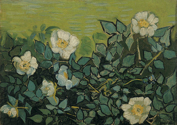 Painting - Wild Roses by Vincent van Gogh