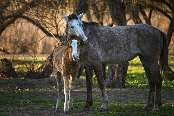 Wall Art - Photograph - Wild Salt River Horse Love by Dave Dilli